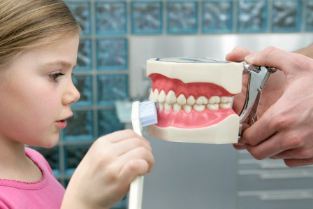 Girl Brushing Anatomical Model of Teeth --- Image by © Wolfgang Flamisch/Corbis
