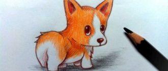 нарисовать собаку карандашом поэтапно для начинающих