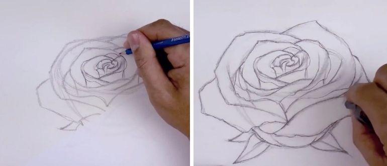 нарисовать розу карандашом поэтапно для начинающих